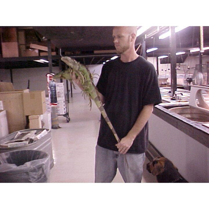 Green Iguana 4 foot