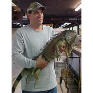 Green Iguana 5 foot plus