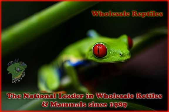 Wholesale Reptiles - Strictly Reptiles