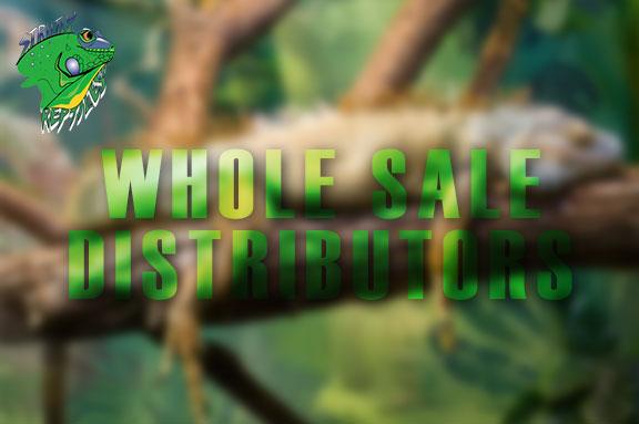 Reptile Wholesale Distributors