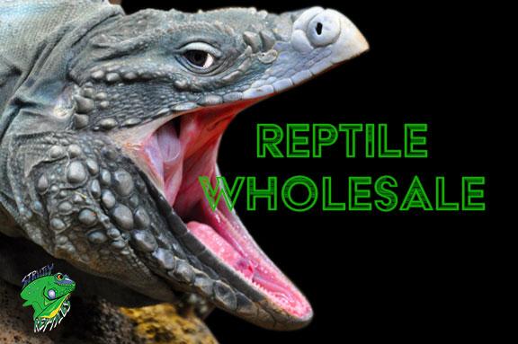 Reptile Wholesale