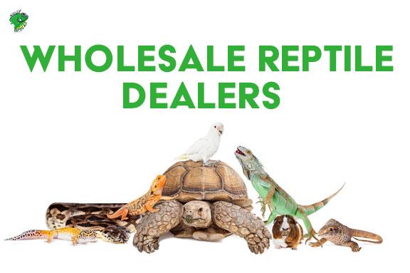 Wholesale Reptile Dealers