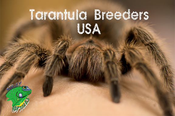 Tarantula Breeders USA - Strictly Reptiles - Wholesale Providers