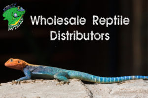 Wholesale Reptile Distributors