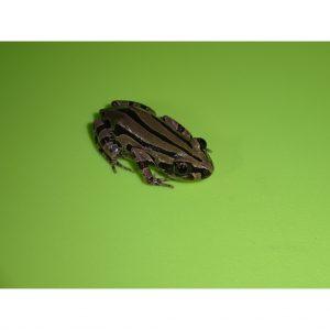 Green & Black Running Frog