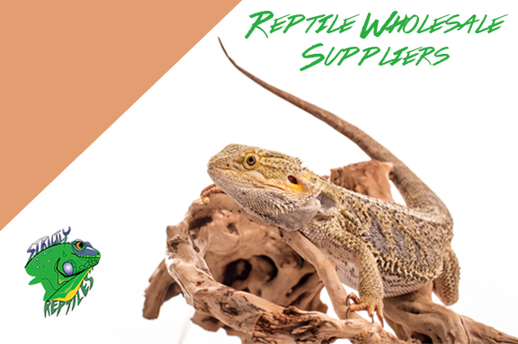 Reptile Wholesale Suppliers