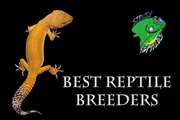 Best Reptile Breeders