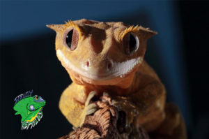 Live Reptiles for Sale