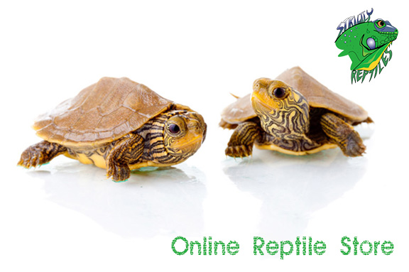 Online Reptile Store