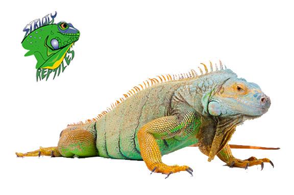Online Reptile Shop