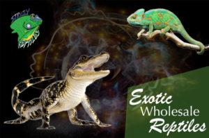Exotic Pet Reptiles