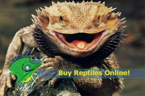 Reptiles for Sale Online - Strictly Reptiles - Wholesale Reptiles