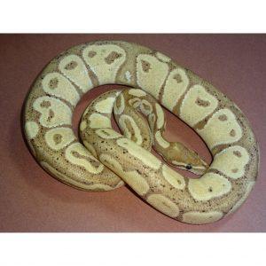 Banana male 640gr
