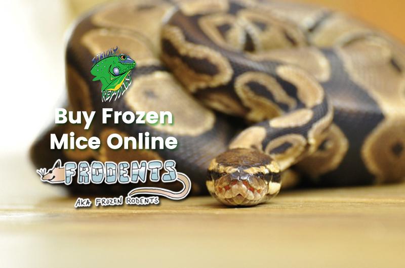 Frozen Mice Online