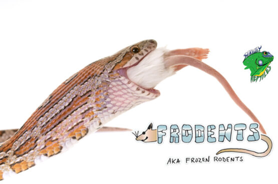 Frodents (aka Frozen Rodents)