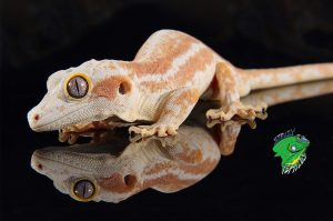 Exotic Reptiles Pet Shop