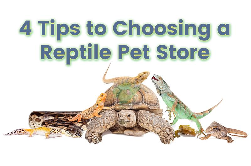 Reptile Pet Store