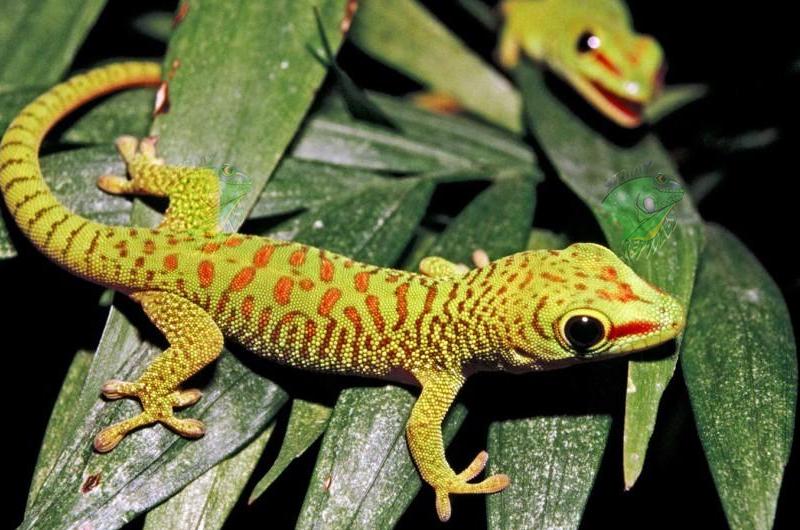 Online Reptile Pet Store