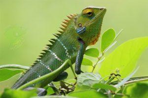 Best Online Reptile Store