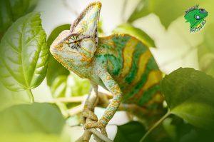 Live Reptiles