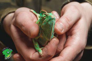 Pet Reptiles for Sale