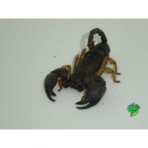 Online Reptile Store Wholesale Reptiles Lizards