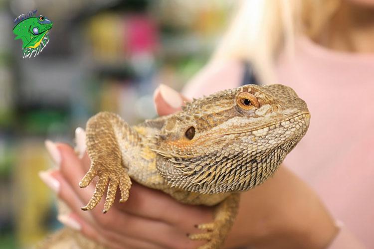 Buy Pet Reptiles Online