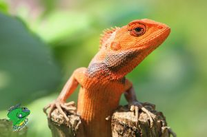 cheap reptiles for sale online