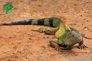 Pet Reptiles Online