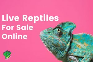 Live Reptiles For Sale Online
