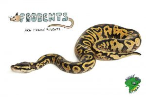 Frozen Rodents for Snakes