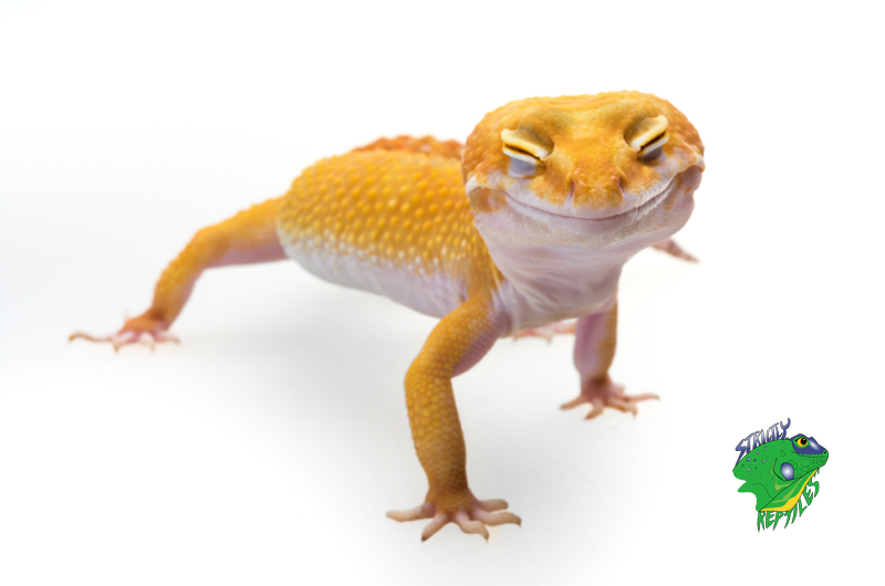 Reptiles and Amphibians Online