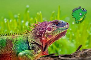 Wholesale Reptile Suppliers
