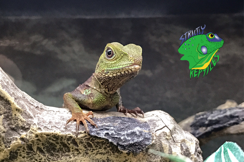 Wholesale Reptiles Snakes