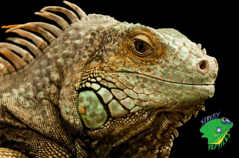 Reptile Pet Store Online