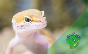 Reptile Stores Online