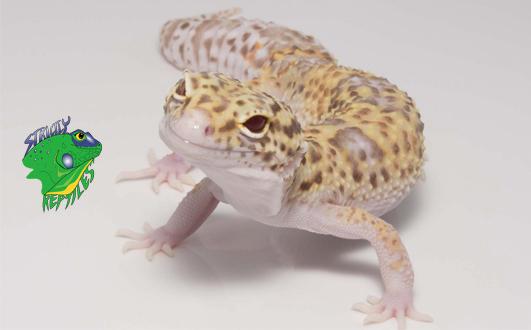 Leopard Gecko Breeders