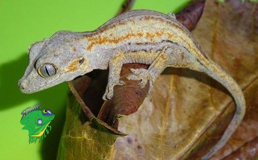 Reptile Online Shop