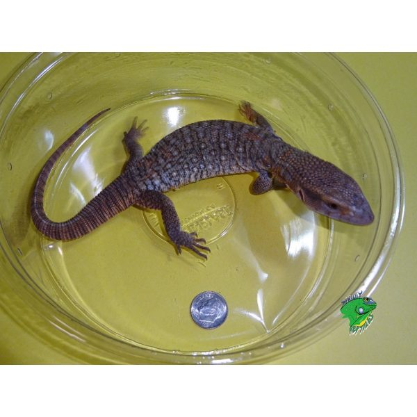 Online Reptile Store | Wholesale Reptiles | Lizards, Snakes