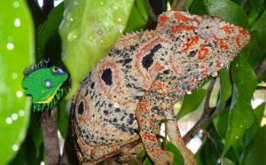 Wholesale Reptile Websites
