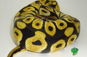 Cool Reptile Pets