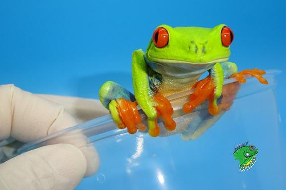Amphibians For Sale