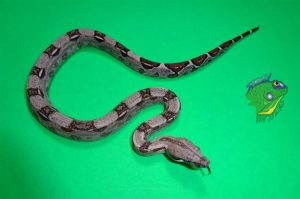 Where To Buy Snakes