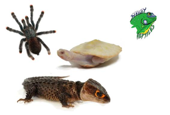 Exotic Pets For Sale Online