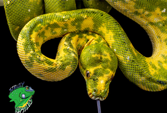 Why Order Reptiles Online?