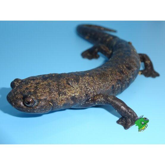 Amphibians & More