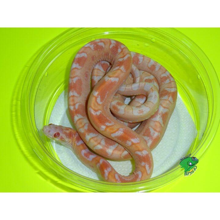 types of reptiles