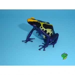 reptile distributor