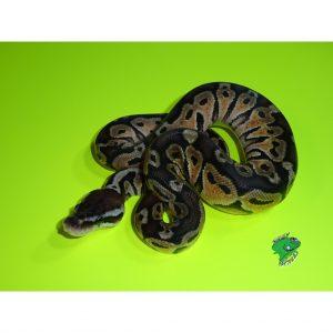 snake food wholesale