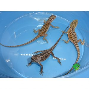 reptile pets wholesale